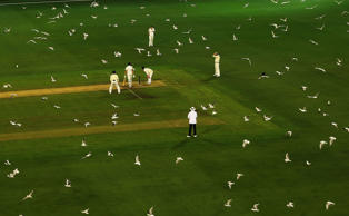 MELBOURNE, AUSTRALIA - OCTOBER 26:  Hundreds of seagulls fly over the pitch as Tasmania bats during day two of the Sheffield Shield match between Victoria and Tasmania at the Melbourne Cricket Ground on October 26, 2016 in Melbourne, Australia.  (Photo by Scott Barbour/Getty Images)