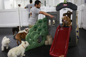 Carlos Aguilez, a dog handler, points to a dog at the D Pet Hotel in New York December 5, 2013.