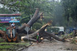 Municipal workers cut a tree that fell when Tropical Storm Otto hit the area with heavy rains in Panama City, Panama, November 22, 2016.