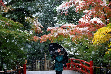 In this Thursday, Nov. 24, 2016 photo, a visitor takes a photo in the snow at the Tsurugaoka Hachimangu Shrine in Kamakura, near Tokyo. Tokyo residents woke up Thursday to the first November snowfall in more than 50 years. (AP Photo/Shizuo Kambayashi, Fi