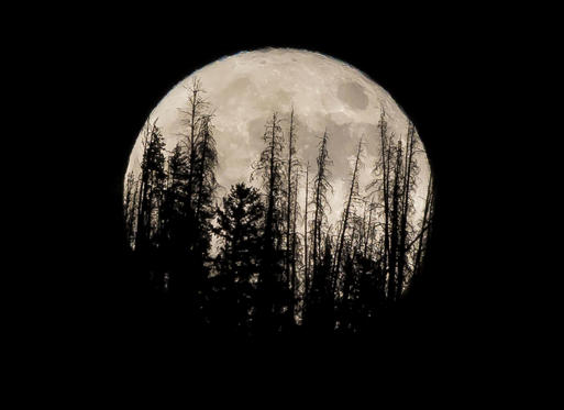 Slayt 1/56: Evergreen trees are silhouetted on the mountain top as a supermoon rises over over the Dark Sky Community of Summit Sky Ranch in Silverthorne, Colo., Monday, Nov. 14, 2016.