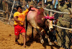 A Young Man Runs As He Attempts to Catch a Bull During the Bull-taming Festival of Jallikattu