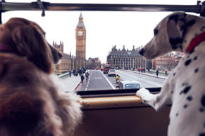 MORE TH>N DOGGYSSENTI>LS tour bus for dogs, London, UK - 15 Jan 2017 Doggy essentials tour bus