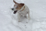 Dog clearly in doggy heaven with heavy snowfall