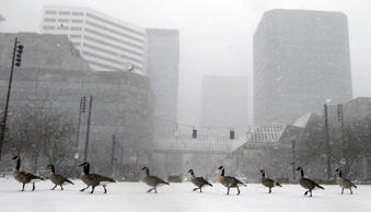 Geese walk along the snow covered waterfront park through heavy snowfall as the ...