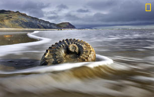 A fossilized shell lays on this treasure-filled beach near Charmouth and Lyme Regis in Dorset, England.