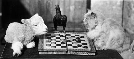 21st February 1933: A lamb and a cat playing draughts, watched over by a bantam,...