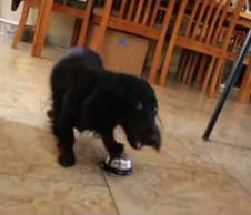Clever Dog Rings Bell to Receive His Treats
