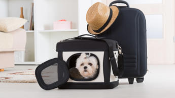 <p>If traveling with your furry friend is a must, you'll need to book with pet-f...