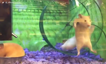 Hamster takes his friend for a spin
