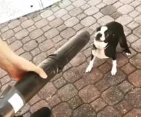 Puppy 'fights' leaf blower
