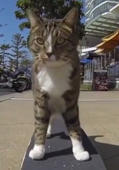 Cat uses a skateboard to travel