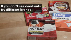 Get Rid of Ants Without an Exterminator