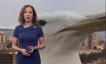 When a giant seagull bombs your weather report