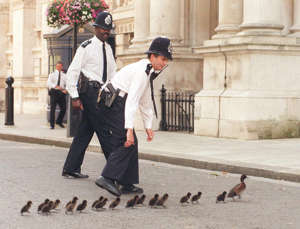Police officers on duty in Downing Street, run to take care of a mother duck taking her family on a shortcut from St James's Park. The ducks were eventually rounded up and taken back to the park. (Photo by Ben Curtis - PA Images/PA Images via Getty Images)
