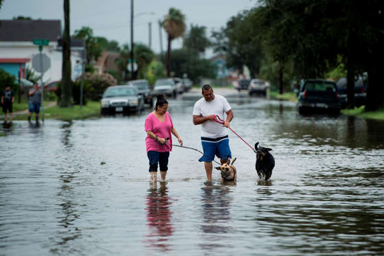 Slide 2 of 65: People walk dogs through flooded streets as the effects of Hurricane Henry are seen August 26, 2017 in Galveston, Texas.