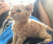 The internet's really curious about 'curly-haired' cats