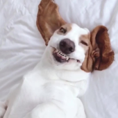 Instagram dog has the funniest smile
