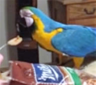 Parrot very vocal about love of peanut butter