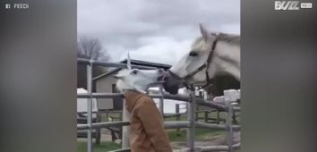 Human-unicorn pranks horse