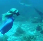 Woman swims with sharks in the waters of Roatan