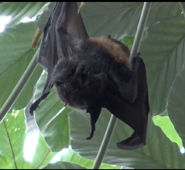 Bat Gives Zoo Visitors Unpleasant Surprise Before Demonstrating Impressive Wingspan