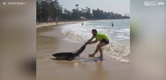 Man drags beached shark back to sea