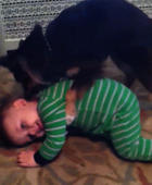 Puppy gives baby a bath