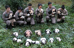 Neugeborene Panda in China
