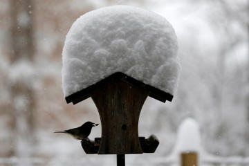 A bird finds some respite from the falling snow under a feeder in rural Orange County near Hillsborough, N.C., Wednesday, Jan. 17, 2018. The National Weather Service issued winter storm warnings or winter weather advisories for almost all of North Carolina for Wednesday. (AP Photo/Gerry Broome)