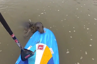 Cute Seal plays with paddleboarder