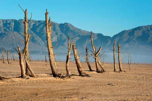 A picture taken on May 10, 2017 shows bare sand and dried tree trunks standing out at Theewaterskloof Dam, which has less than 20% of it's water capacity, near Villiersdorp, about 108km from Cape Town. South Africa's Western Cape region which includes Cape Town declared a drought disaster on May 22 as the province battled its worst water shortages for 113 years. This dam is the main water source for the city of Cape Town, and there is only 10% of it's usual capacity left for human consumption, at the last 10% is not useable, due to the silt content.  / AFP PHOTO / Rodger BOSCH        (Photo credit should read RODGER BOSCH/AFP/Getty Images)