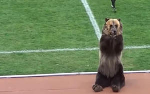 The circus bear, called 'Tim', was trained to hand the match ball to the referee of the clash between Mashuk-KMV and Angusht in Pyatigorsk.