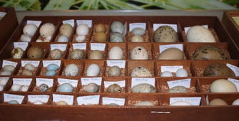 Rare collection of 100-year-old bird eggs donated to UK zoo