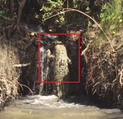 Watch: Crocodile tries to scale waterfall in Australia