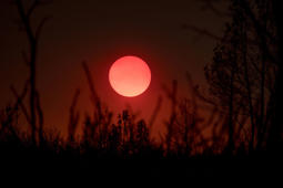 TOPSHOT - Burnt trees stand as the sun sets in a smokey skyline in Mariposa, California on July 19, 2017.  The Detwiler fire is currently at 7 percent containment and has burned more than 45,000 acres and destroyed eight structures.  / AFP PHOTO / JOSH EDELSON        (Photo credit should read JOSH EDELSON/AFP/Getty Images)