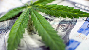 a close up of a reptile: With many of the nation's archaic views surrounding cannabis going up in smoke, a new wave of financial infrastructure has swept the American landscape.Click through to read about one of the fastest-growing industries to invest in for 2018.