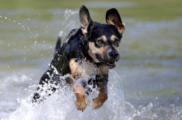 Dog Amber jumps in a lake during a sunny spring day at Prater park in Vienna, Austria, April 20, 2018. REUTERS/Lisi Niesner