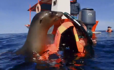 Watch a playful Sea Lions encounter in Los Islotes
