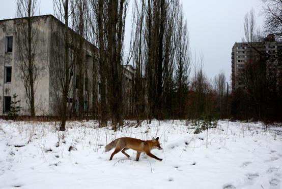 Slide 23 de 25: Chernobyl