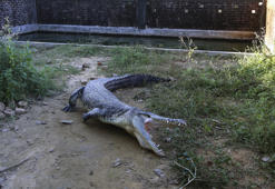 COX'S BAZAR, BANGLADESH - DECEMBER 6: A crocodile yawning near a pond at the crocodile farm which has almost 600 crocodiles for export in Balukhali area near Cox's Bazar, Bangladesh on December 6, 2017. Crocodiles have been bred in the farm for their skins and meat to be sold around the world.  (Photo by Firat Yurdakul/Anadolu Agency/Getty Images)