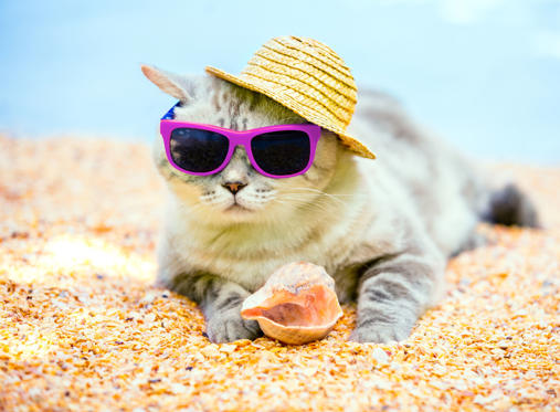 69 枚のスライドの 1 枚目: Cat wearing sunglasses and sun hat relaxing on the beach