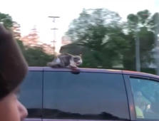 Caught on video: cat clings to van's roof on Nebraska highway