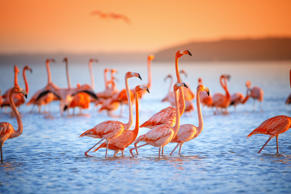 This was shot on a boat ride to view flamingos wading in the saltwater flat in Celestun, Mexico.