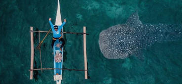 Whale shark sneaks up on sleepy fisherman