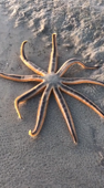 Watching a sea star slowly walk along a sandbar will mesmerize you