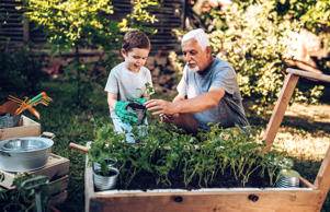 Grandfather and grandson planting in backyard