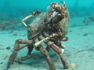 Crabs show off their tango dance moves