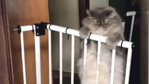 This epic cat fail will have you rolling on the floor laughing