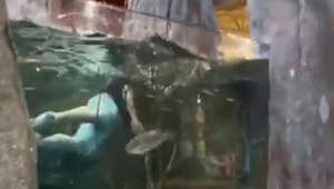 Louisiana shoppers shocked as man swims in store fish tank